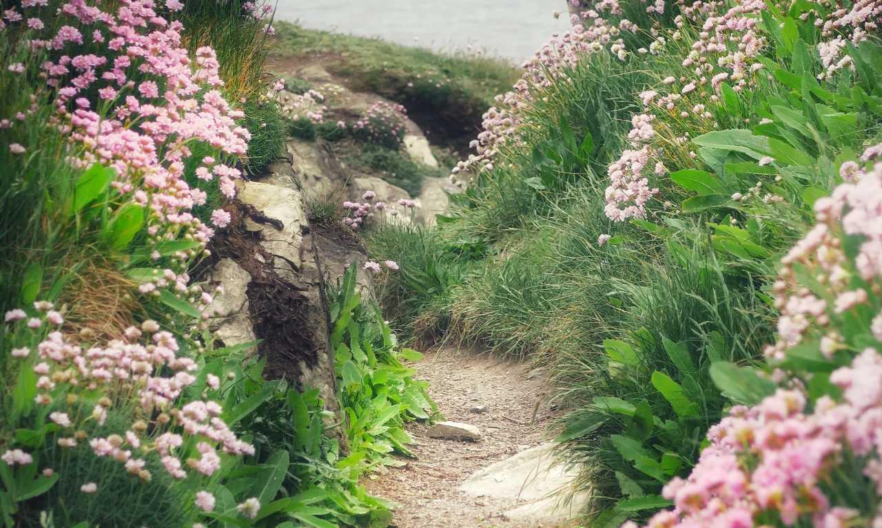 Newquay walks cornwall
